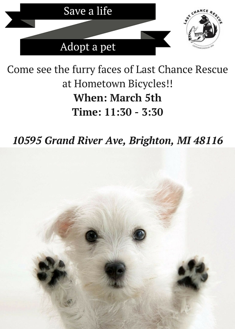 Puppies! Come out to Hometown Bicycles on Sat. March 5th from 11:30-3:30 to meet our newest additions!!!
